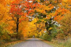 autumn-1010386_1920