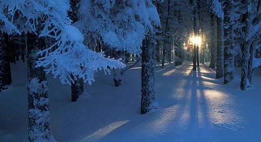 trees_snow2