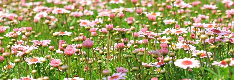 flower-meadow-1510602_960_720[1]