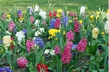 spring f.jpg